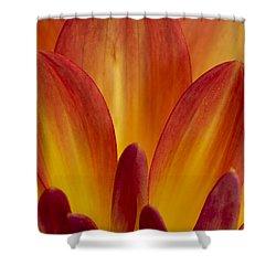 Orange Dahlia Petals Shower Curtain