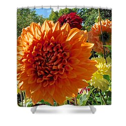 Orange Dahlia Suncrush  Shower Curtain
