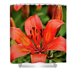 Shower Curtain featuring the photograph Orange Day Lilly Single by Mary Jo Allen