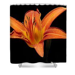 Orange Day-lily Shower Curtain