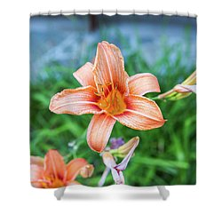 Orange Daylily Shower Curtain