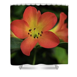 Orange Flower Shower Curtain