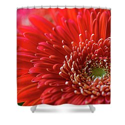 Shower Curtain featuring the photograph Orange Gerbera by Clare Bambers