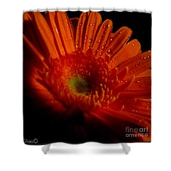 Orange Gerbera Shower Curtain