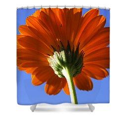 Orange Gerbera Flower Shower Curtain