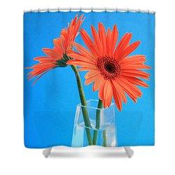 Orange Gerberas In A Vase - Aqua Background Shower Curtain