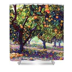 Orange Grove Of Citrus Fruit Trees Shower Curtain