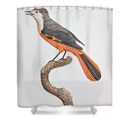 Orange Jay Shower Curtain by Jacques Barraband