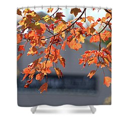 Orange Leaves Of Autumn Shower Curtain