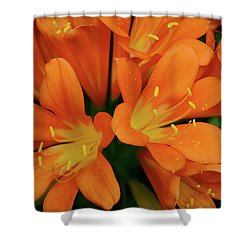 Orange Lilies No. 1-1 Shower Curtain