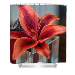 Shower Curtain featuring the photograph Orange Lilly And Her Companion Abstract by Diana Mary Sharpton