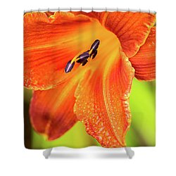 Orange Lilly Of The Morning Shower Curtain by Ken Stanback