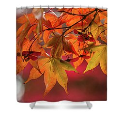 Shower Curtain featuring the photograph Orange Maple Leaves by Clare Bambers