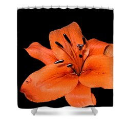 Shower Curtain featuring the photograph Orange Orchid On Black by Karen Nicholson