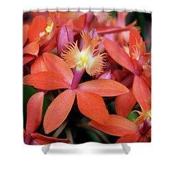 Orange Pink Epidendrum Orchid Shower Curtain