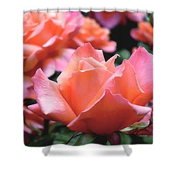 Orange-pink Roses  Shower Curtain by Rona Black