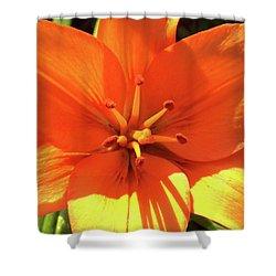 Orange Pop Shower Curtain