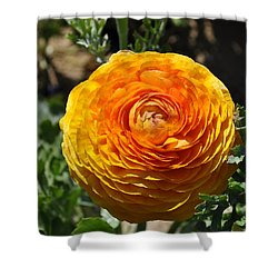 Orange Ranunculus Shower Curtain