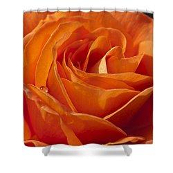 Orange Rose 2 Shower Curtain by Steve Purnell