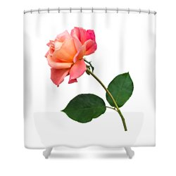Orange Rose Specimen Shower Curtain