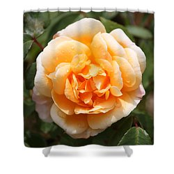 Orange Rose Square Shower Curtain by Carol Groenen