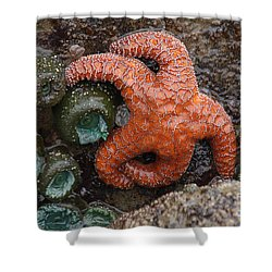Orange Starfish And Anemonies Shower Curtain