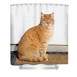 Shower Curtain featuring the digital art Orange Tabby Cat by Jana Russon