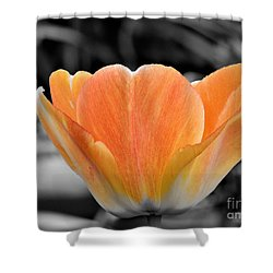 Orange Tea Cup Tulip Shower Curtain