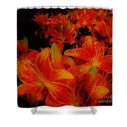 Spicey Tiger Lilies Shower Curtain