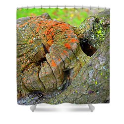 Orange Tree Stump Shower Curtain