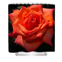 Orange Tropicana Rose  Shower Curtain by Michael Moriarty