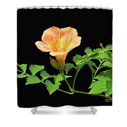 Orange Trumpet Flower Shower Curtain