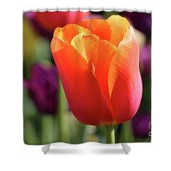 Orange Tulip In Franklin Park Shower Curtain