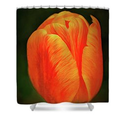 Shower Curtain featuring the photograph Orange Tulip Painting Neo Rembrandt Style by Matthias Hauser