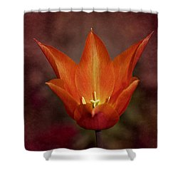 Orange Tulip Shower Curtain by Richard Cummings
