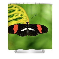 Orange, White And Black Butterfly  Shower Curtain