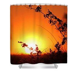 Orange Wonder Shower Curtain