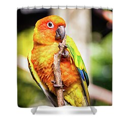 Orange Yellow Parakeet Shower Curtain by Stephanie Hayes