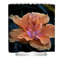 Orangecicle Shower Curtain