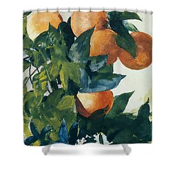 Oranges On A Branch Shower Curtain by Winslow Homer