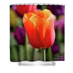 Orange Tulip Square Shower Curtain