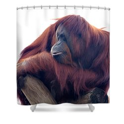 Shower Curtain featuring the photograph Orangutan - Color Version by Lana Trussell