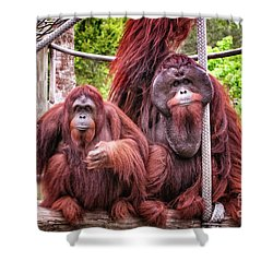 Orangutan Couple Shower Curtain by Stephanie Hayes