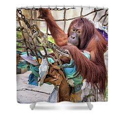 Orangutan In Rope Net Shower Curtain by Stephanie Hayes