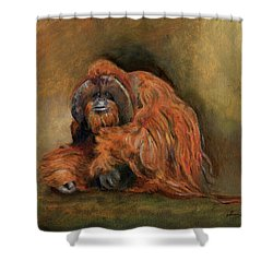 Orangutan Monkey Shower Curtain
