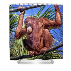 Orangutan On Ropes Shower Curtain by Stephanie Hayes