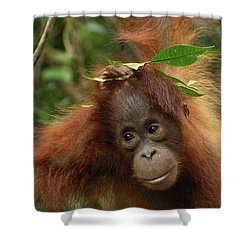 Orangutan Pongo Pygmaeus Baby, Camp Shower Curtain by Thomas Marent
