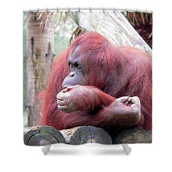Orangutang Contemplating Shower Curtain