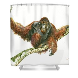 Orangutang Shower Curtain