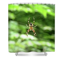 Orb Weaver Shower Curtain